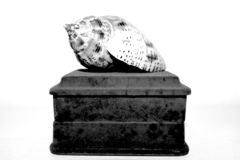 Black And white Photo of a seashell Kept over a box. With white background, and Good exposure stock image
