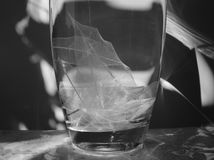 Black and white photo of skeletonized leaf of ficus (Ficus benjamina). On a glassy vase stock images
