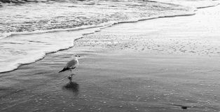 A Walk Along the Beach royalty free stock photography