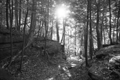 A black and white photo of sun set. A black and white photo of the sun setting in the forest stock photo