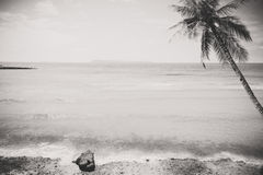 Black and white photo of tropical seaside seascape in summer Royalty Free Stock Photography