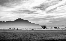 Black and white photo of very vast, broad, extensive, spacious rice field. Streched into the horizon.  Behind it is a line of hills and mountains that also Royalty Free Stock Photography