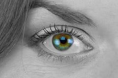 Black and white photo of woman's green eye Stock Photos