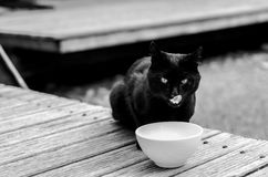 Black and white photograph of a cat drinking milk Stock Photo