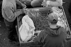 Black and white photograph fishermen at work Royalty Free Stock Images