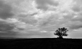 A black and white photograph of an  tree on a huge grassland Royalty Free Stock Image