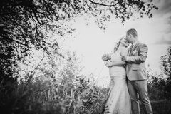 Black white  photography beautiful wedding young couple stand on background forest Royalty Free Stock Photo