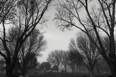 Black and White photography on branches. Winter Stock Photos