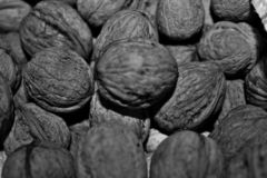 black and white photography depicting walnuts. stock photography