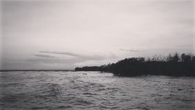 Black and white photography of seacoast and mangrove forest stock image