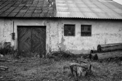 Abandoned farm house with a trees stock photo