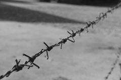 Black and white picture of a barbed wire. They tried to bury us. They didn`t know we were seeds Royalty Free Stock Photo