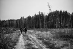 Road to the forest with tourists. Autumn nature stock photography