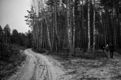 Two roads to the forest with people. Autumn nature stock photography