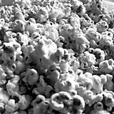Black and white picture of pop corn kernels Stock Photos