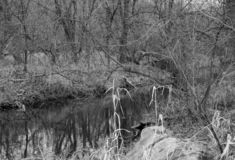 A River showing Fall in the Midwest. A black and white picture of a river wandering thru the Midwest. Photo taken Nov 1, 2018 royalty free stock photo