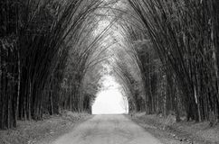 Black and white picture of road in Green Bamboo Forest stock photo