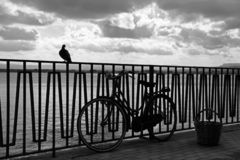 City of Siracusa, by the sea a bird and a bicycle royalty free stock photo