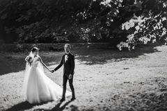 Black and white picture of a wedding couple walking in the garde Stock Images