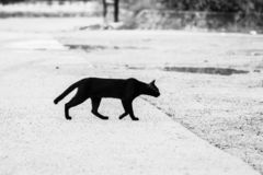 Black and white pictures of black cats walking through the road to the other side Giving a feeling of loneliness, loneliness royalty free stock images