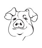 Black and white pig fase Stock Photography