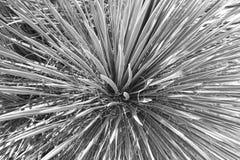 Black and white plant Stock Photos