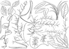 Black and White Plant Leaves Drawing Set vector illustration