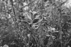Black and white plants Royalty Free Stock Photos