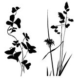 Black and white Plants silhouettes collection Royalty Free Stock Photos
