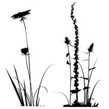 Black and white Plants silhouettes collection for designers. Set Royalty Free Stock Image