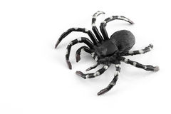 Black and white plastic spider Stock Images