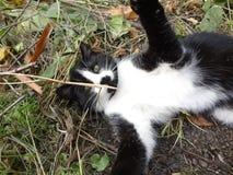 Kitty enjoying outdoor royalty free stock photography