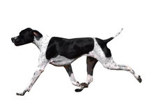 Black and White Pointer Stock Photos