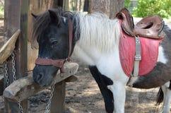 Black and White Pony Stock Image