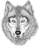 black and white portrait of furry wolf  Royalty Free Stock Photography