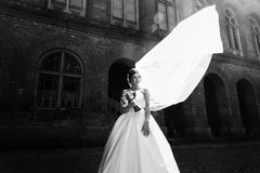 Black and white portrait of the gorgeous bride Stock Image