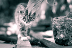 Black and white portrait of a kitten in the street Royalty Free Stock Photos