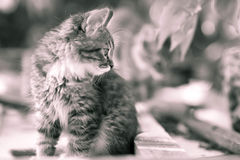 Black and white portrait of a kitten in the street Stock Photos