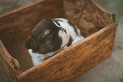 Black and White Puppy on Brown Wooden Box Royalty Free Stock Photos