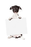 Black and White Puppy Holding Blank Sign Stock Photo