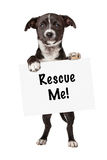 Black and White Puppy Holding Rescue Me Sign Royalty Free Stock Images