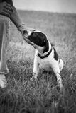 Black and white puppy Stock Photography