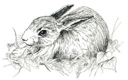 Black & white rabbit. A black and white bunny hand drawn with ink vector illustration