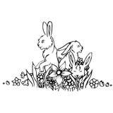 Black and white rabbit  Royalty Free Stock Image