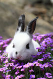 Black and white rabbit in the flowers Stock Photo