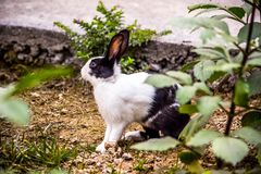 Black and White Rabbit Stock Photo