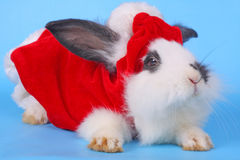 Black and white rabbit with Santa hat Stock Images