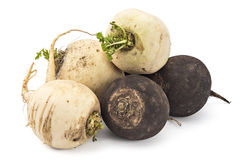 Black and white radishes Royalty Free Stock Images