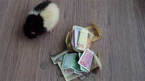Black-and-white rat washes on coins and banknotes. Currencies around world. stock footage