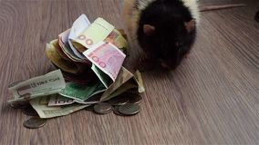 Black-and-white rat washes on coins and banknotes. Currencies around world. stock video footage